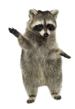 raccoon_PNG16968